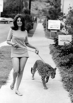 Natalie Wood's younger sister LANA keeping a leopard on a lead for a 1969 issue of Italian magazine ''Playmen''
