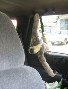 This is how my sloth is going to ride in the car with me.