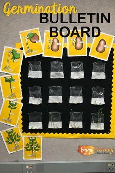Create a growing bulletin board! Just add seeds every day, and watch them germinate. Teaching Plants, Teaching Science, Science For Kids, Science Ideas, Parts Of A Flower, Parts Of A Plant, Girl With Pigtails, Classroom Bulletin Boards, Elementary Science