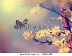 Butterfly Fotos, imagens e fotografias Stock   Shutterstock