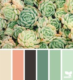Succulent hues Room Colors, House Colors, Colours, Colour Pallete, Color Combinations, Color Palettes, Design Seeds, Braun Beige, Palette Verte