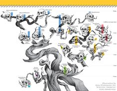"""""""HUMAN FAMILY TREE used to be a scraggly thing..."""" [Illustration by Katy Wiedemann, Source: Bernard Wood; in """"Where We Came From"""" By Bernard Wood, Scientific American, September 2014]"""