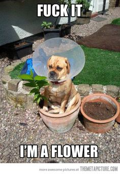making the most of the cone of shame