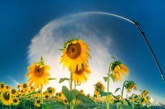 Aspersor de plástico 💦 de impacto, sectorial y de circulo completo ideal para cultivos como los girasoles🌻 👇 👇 [+Info ➡ 955 99 81 81/ info@aquatubo.com] Plants, Water Treatment, Irrigation, Sunflowers, Plant, Planets