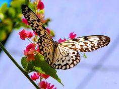 fotografias de mariposas y flores - Fotografias y fotos para imprimir