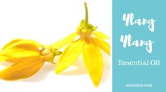 Ylang ylang essential oil can boost self esteem, calm the mind and relieve depression. Learn all the benefits of ylang ylang essential oil today.