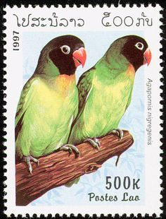 Black-cheeked Lovebird stamps - mainly images - gallery format