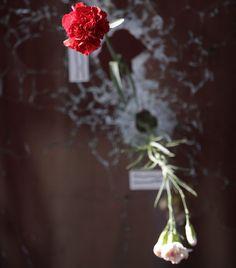 Flores são deixadas em buracos de bala na janela do bar Carillon em Paris. Jihadistas do Estado Islâmico reivindicaram os ataques coordenados por homens armados e suicidas em Paris  que matou pelo menos 129 pessoas e feriu centenas. Kenzo Tribouillard / AFP by otempo