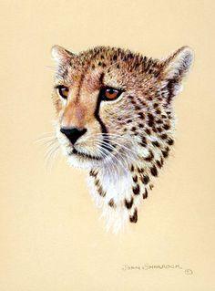 cheetah drawing (tattoo) by nicksfanatic, via Flickr