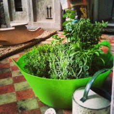 Profumo di orto da Clo'eT Laboratorio: timo, mentuccia, lavanda, origano, rosmarino! #cloet #cloetlab #cloetlaboratorio #mentuccia  #rosmarino #origano #timo #lavanda #origano #orto #ortoinlaboratorio #green #garden #bergamo #bergamocentro #open
