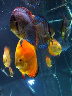 Colorful Tropical Fish Bing Images Color Inspiration