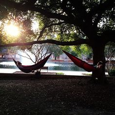 Hammock session outside the library. Calm before the storm #finalsweek #treklight  (via @micheloeb_ultra)