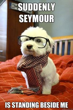 Hipster Dog - suddenly seymour is standing beside me