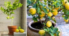 31 meilleures images du tableau jardinage gardening gardening tips et small gardens. Black Bedroom Furniture Sets. Home Design Ideas