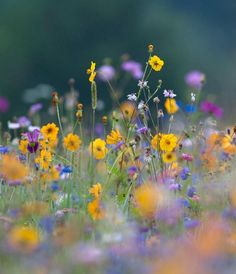 Beautiful Spring Meadow Flowers | beautiful spring flowers | Flowers and Meadows | Pinterest