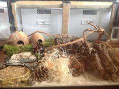 Naturel living cage hamster