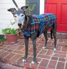 Greyhound Dog Coat & Jacket, Blue, Red, Green, Black, Yellow, and White Tartan Plaid Fleece with Black Fleece Lining