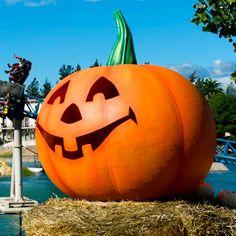 ¿Aún no tienes #planes para #Halloween?