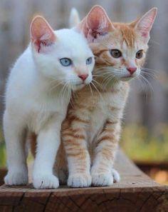 Precious and adorable kitties!!!❤❤