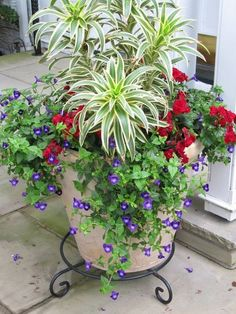 Beautiful container garden - this year I vow I will keep them alive despite my black thumb!