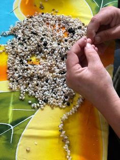 Traditional Pipi Teatea Shell necklace made by craftswoman Shell Necklaces, Coconut Flakes, Shells, Spices, Traditional, Food, Conch Shells, Spice, Sea Shell Necklaces