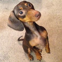"""Ariel begging for some food. 