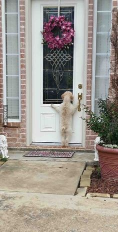 """Mummy. Mummy. Mummy. Mummy. Mummy.  Mummy. Open door. Open door.  OOOOPPPPEERENNN DOOOOOR!"