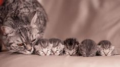Post with 1 votes and 31784 views. Mother Cat With Her Kittens Cute Cats And Kittens, I Love Cats, Crazy Cats, Kittens Cutest, Animals And Pets, Baby Animals, Funny Animals, Cute Animals, Pretty Cats