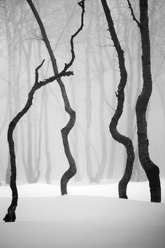 Trees in silhouette | Winter | Black and white | Trunks / wood / snow |