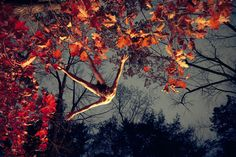ryan_mcginley_jumping_red_leaves