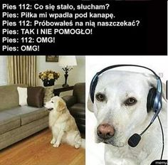 Polish Memes, Weekend Humor, Past Tens, Funny Mems, Wtf Funny, Animal Memes, Best Memes, Haha, I Am Awesome