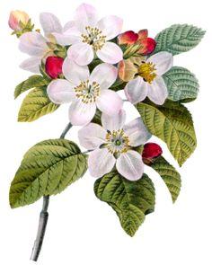 Коллекция картинок: Цветы клипарт PNG, GIF