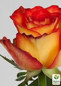 Lavender Roses, Love Rose, Beautiful Roses, House Plants, Shrubs, Floral Arrangements, Pretty, Nature, Birthdays