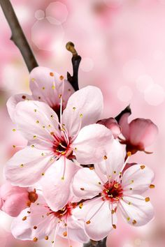 Low cost healthy recipes for two people kids pictures Frühling Wallpaper, Spring Wallpaper, Cute Wallpaper Backgrounds, Flower Backgrounds, Flower Wallpaper, Nature Wallpaper, Cute Wallpapers, Cherry Blossom Wallpaper Iphone, Exotic Flowers