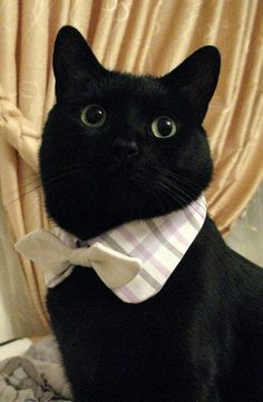 Just a cat about town...Sharp..
