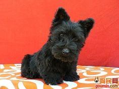 A stationary scottie-pup?