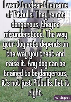 It's true. I've met some pretty mean chihuahuas and those things bite hard. I don't care what anyone says, all dogs can be vicious I Love Dogs, Puppy Love, Dog Quotes, Life Quotes, Pitbull Names, Whisper Quotes, Pitt Bulls, Whisper Confessions, What Dogs