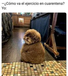 Overweight Dog, Dog Rates, Memes Estúpidos, Puppy Images, Fluffy Puppies, Cute Cats And Dogs, Ewok, Bored Panda, Poodle