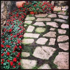 Stone Paviment