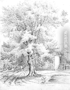 how to draw realistic trees - Google Search                                                                                                                                                      More