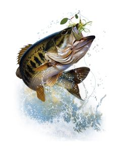 bass fish jumping - Google Search