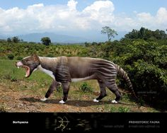 Borhyaena | marsupiales de la argentina extinta Borhyaena