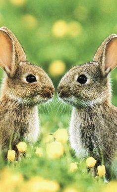bunnies <3 <3 <3