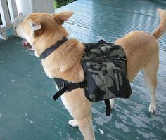 Dog hiking backpack - tutorial with pics - HOME SWEET HOME About the size of my dog, Coda. I have been thinking she should carry her own stuff!