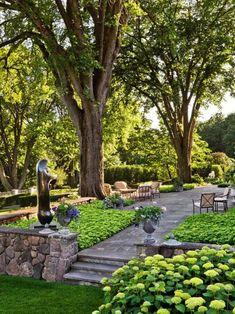Choosing The Best Patio Trees