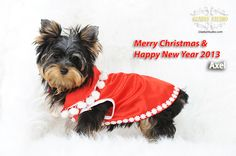 Merry Christmas & Happy New Year 2013!