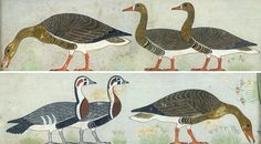 Six Geese a-Laying Christmas Cards design by Nina Davies - copied from a wall painting from mastaba of Itet, Medum (Ancient Eyptian tombs) Pack of 10 cards. Ancient Egyptian Food, Ancient Egyptian Paintings, Egyptian Drawings, Ancient Egypt Art, Old Egypt, Egyptian Art, Cute Animal Illustration, Illustration Artists, Egypt Animals