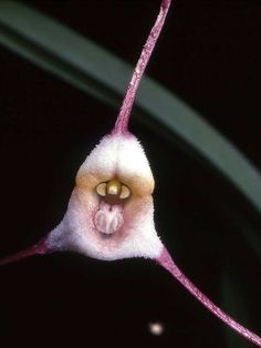 1.) The Dracula Orchid. Wow no thanks.