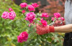 Most plants need regular pruning or a tidy-up every so often. Generally, regular pruning keeps plants healthy and bushy. These tips will have you snipping in all the right places.