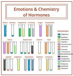 The hormones in the different emotions. - The hormones in the different emotions. Pseudo Science, Stress And Depression, Psychology Facts, Health Psychology, Behavioral Psychology, Educational Psychology, Educational Leadership, Schools Of Psychology, Educational Technology